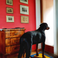 tenuta_casa_cima_ticino_guesthouse (25)